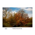 Wydruk 60x120cm - Canson PhotoGloss Premium RC 270g