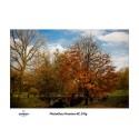 Wydruk 40x50cm - Canson PhotoGloss Premium RC 270g